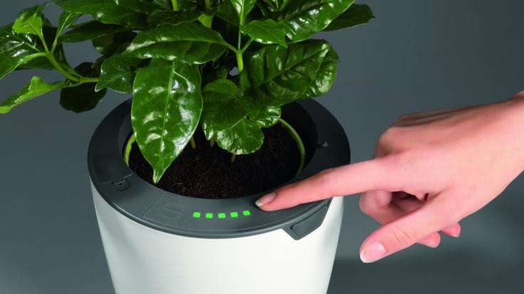 Die DHDL-Blumentöpfe werden über Touch-Tasten bedient. Damit lässt sich unter anderem die Wassermenge bestimmen. (Foto)