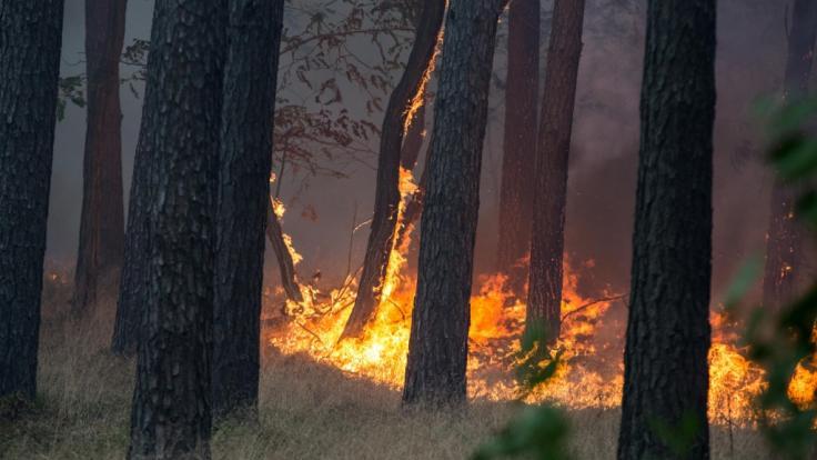 In dem Waldstück zwischen Dreieck Potsdam und Fichtenwalde ist ein Waldbrand ausgebrochen.
