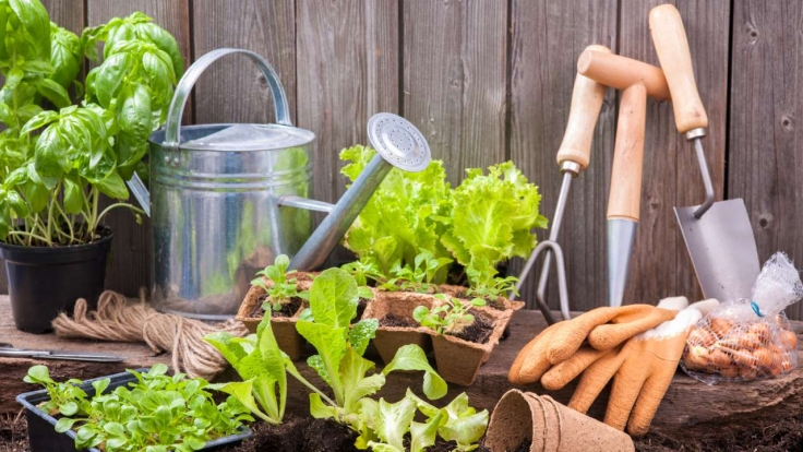Duell der Gartenprofis bei ZDF