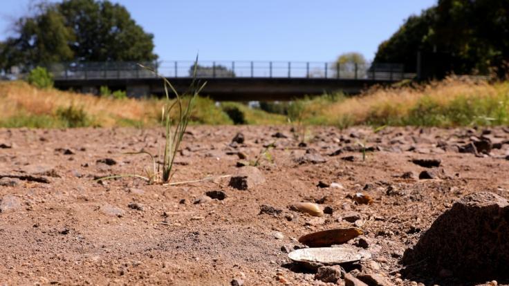 Wegen der Trockenheit und des heißen Wetters ist die Schwarze Elster im Süden Brandenburgs stellenweise trocken.