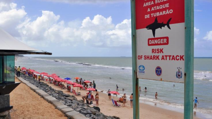 Am Piedade-Strand in Brasilien ist ein Mann im flachen Wasser von einem Hai angegriffen und tödlich verletzt worden (Symbolbild). (Foto)