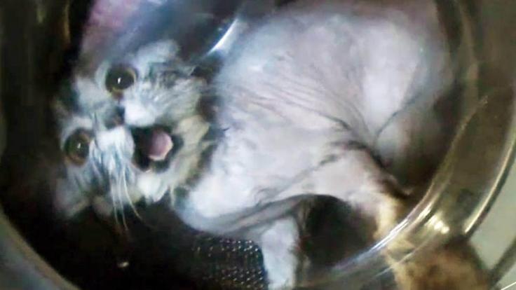 Eine Katze wurde zur Strafe in eine Waschmaschine gesteckt.
