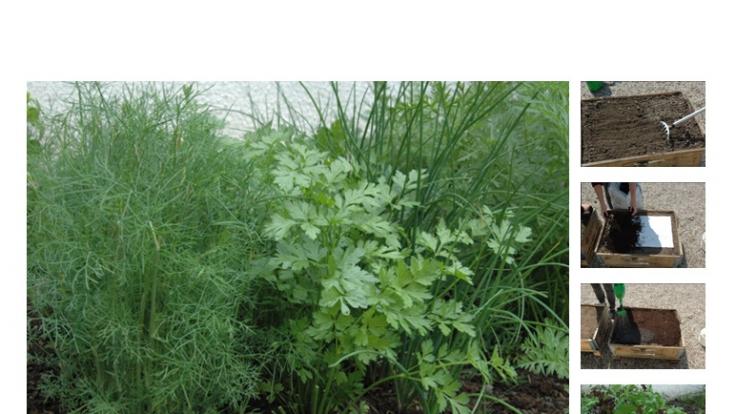 Mit einer Pflanzmatte gelingt das Gemüse auch ohne grünen Daumen.