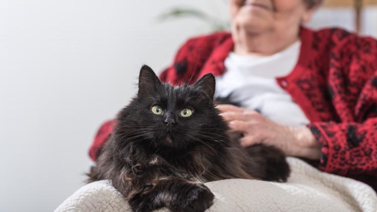 Der Tod einer Seniorin in Spanien blieb monatelang unentdeckt - die Verstorbene wurde erst nach Monaten von ihren Katzen angefressen gefunden (Symbolbild). (Foto)