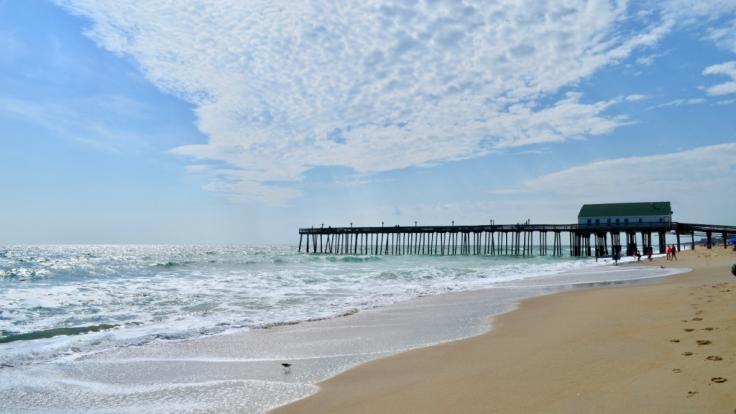 Eine mysteriöse geflügelte Wasserkreatur wurde an die Küste von North Carolina gespült. (Foto)
