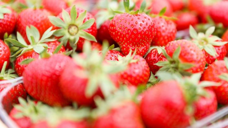 In Erdbeeren aus Polen wurde jüngst der Erregervirus Hepatitis A entdeckt.