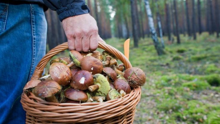 Pilze-Sammler kommen im September und Oktober ganz auf ihre Kosten.