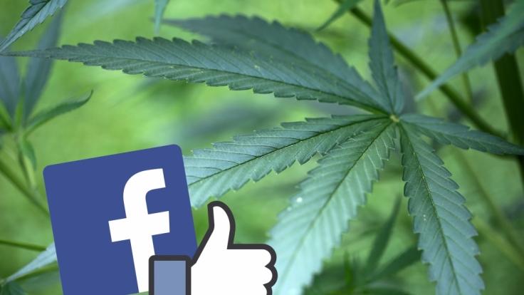 Der Handel mit Marihuana boomt in den Staaten, in denen es legalisiert wurde. Da war es nur eine Frage der Zeit, dass das passende Social Network für Kiffer an den Start ging.