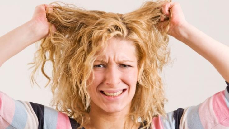 Haareraufen (Foto)