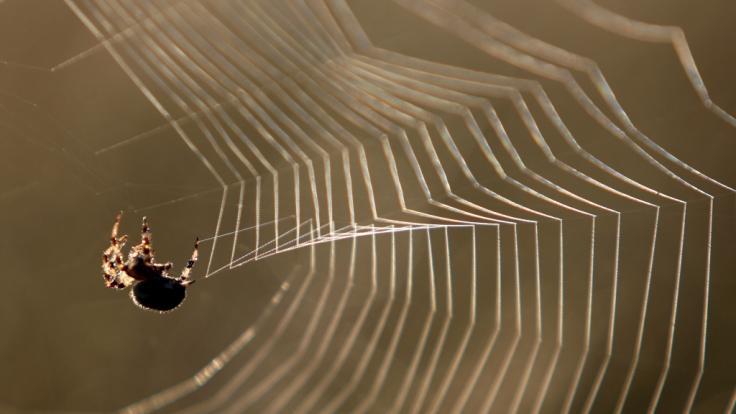 Weil sie eine Spinne in ihrer Garage abfackeln wollte, sitzt eine Frau aus Pullach nun auf einem Schaden von 5.000 Euro.