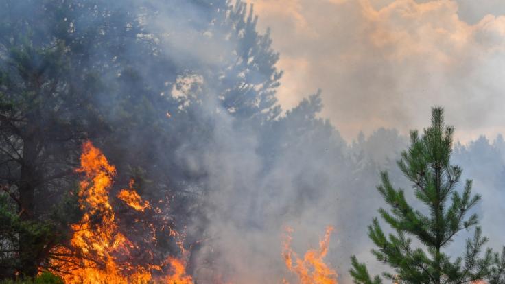 Die Temperaturen steigen am Sonntag. Dadurch erhöht sich gleichzeitig die Waldbrandgefahr.