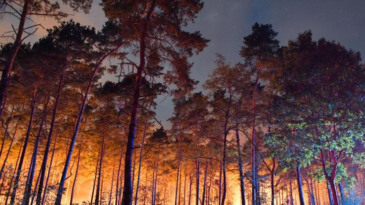 Hell erleuchtet ist ein brennender Wald nahe Klausdorf. Ein Feuer hat sich im Südwesten Brandenburgs auf einer großen Waldfläche ausgebreitet.