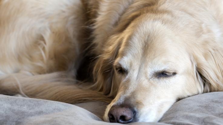 Ein Hund wurde in Kolumbien von mehreren Männern missbraucht.