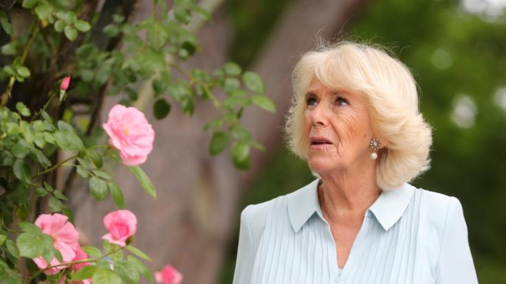 Wollte Herzogin Camilla nur Sex? (Foto)