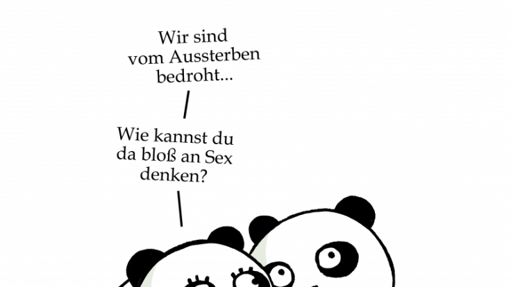 Pandas denken im Bett alles andere als an Sex. (Foto)