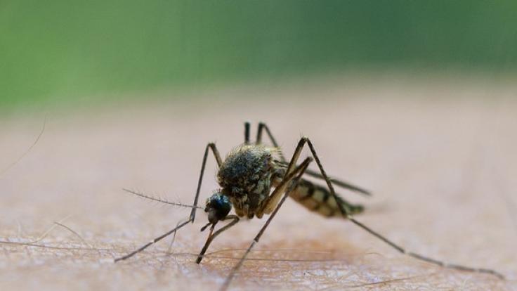 Mückenstiche sind schmerzhaft. Doch soweit muss es gar nicht erst kommen. (Foto)