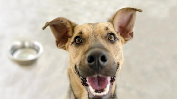 Es gibt Hunde, die sind so fotogen, dass sie einen eigenen Instagram-Account haben. (Foto)