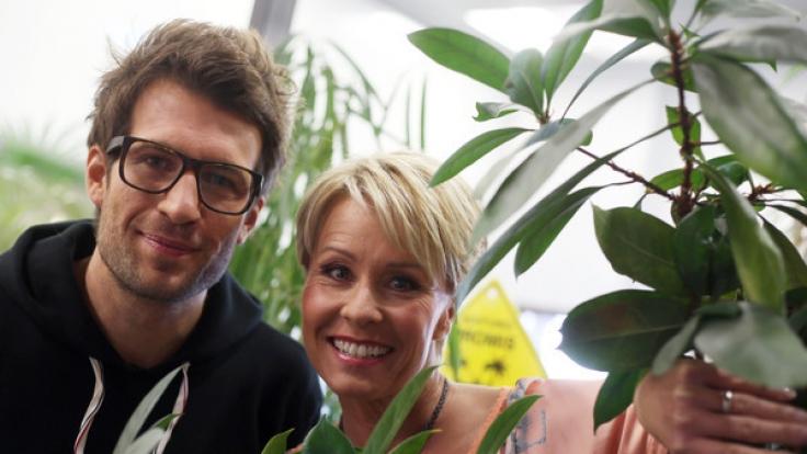 RTL macht pro Dschungelcamp-Folge mächtig Umsatz. Auch die Moderatoren Zietlow und Hartwich sollte das freuen. (Foto)