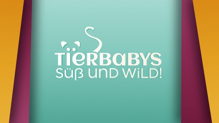 Tierbabys - süß und wild! bei VOX (Foto)