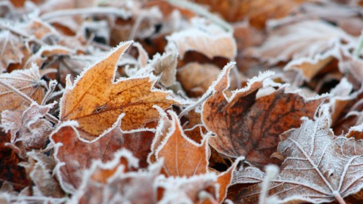Droht uns ein früher Wintereinbruch? (Foto)