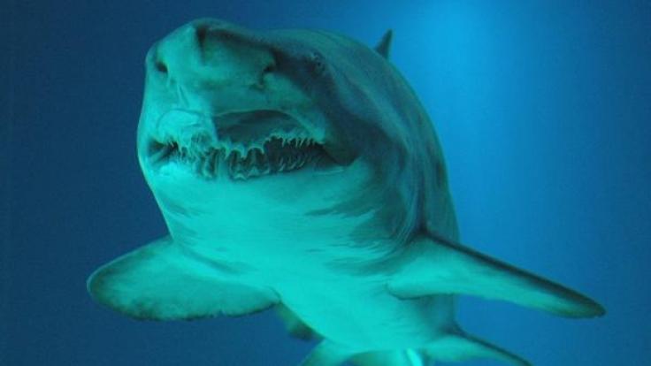 Knapp dem Tod entrungen: Bei einer Haiattacke verlor ein Kampfschimmer Hand und Bein.