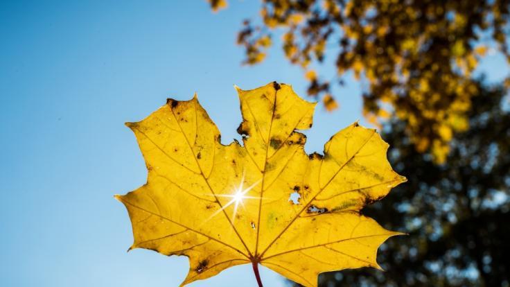 Verspricht der September 2018 einen Goldenen Herbst?