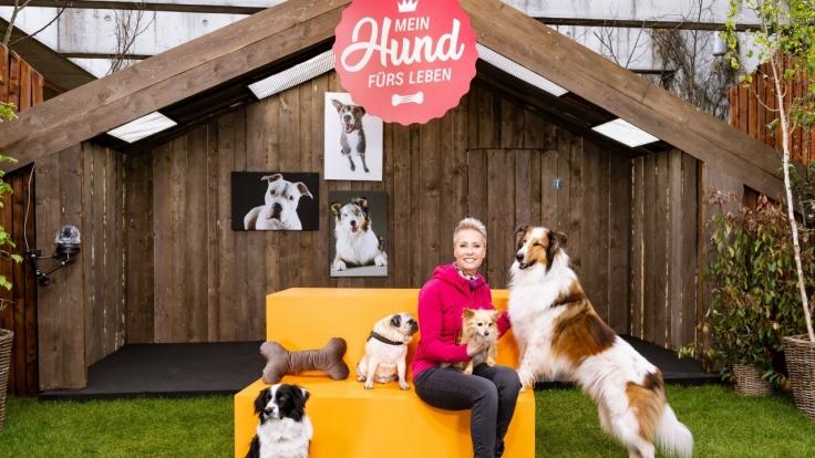 Mein Hund fürs Leben bei ZDF (Foto)
