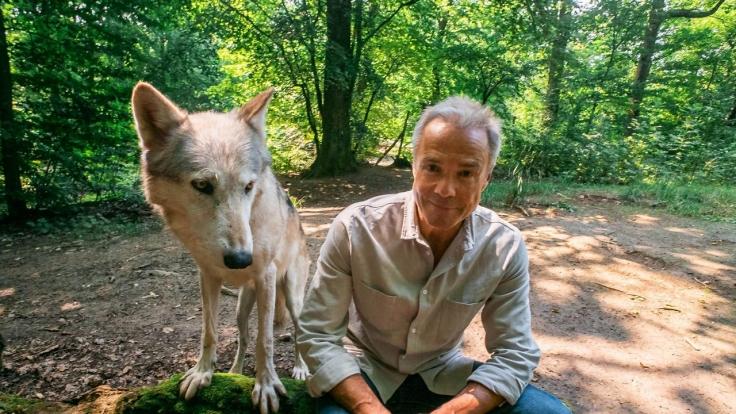 Hannes Jaenicke: Im Einsatz für den Wolf bei ZDF (Foto)
