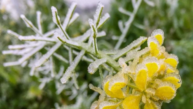 Im Januar 2018 stehen dem Norden Deutschlands frostige Temperaturen ins Haus. (Foto)