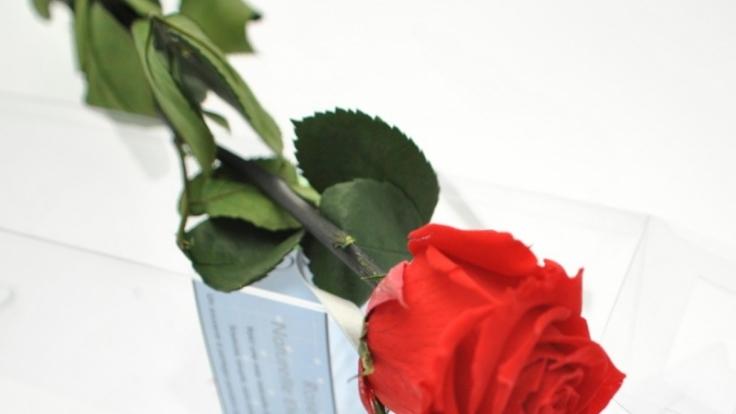 Unvergänglich wie die Liebe: Die immer blühende Rose ist das perfekte Geschenk zum Valentinstag.