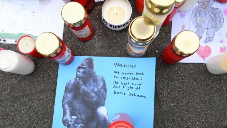 Nach dem Brand im Affenhaus musste ein Polizist einen schwer verletzten Gorilla erschießen. (Foto)
