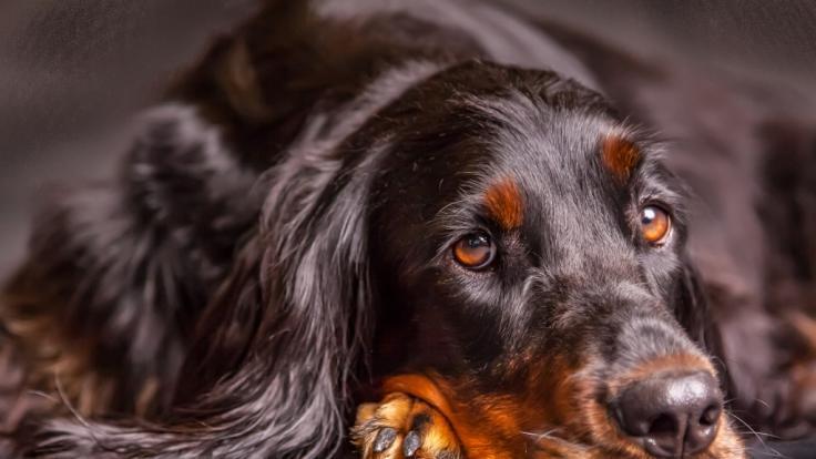 Mit hund sex frauen Der leckende
