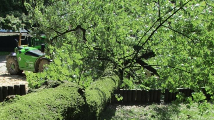 Ein 22 Monate altes Mädchen ist auf einem Spielplatz in Augsburg durch das Umstürzen eines Ahornbaums zu Tode kommen. (Foto)