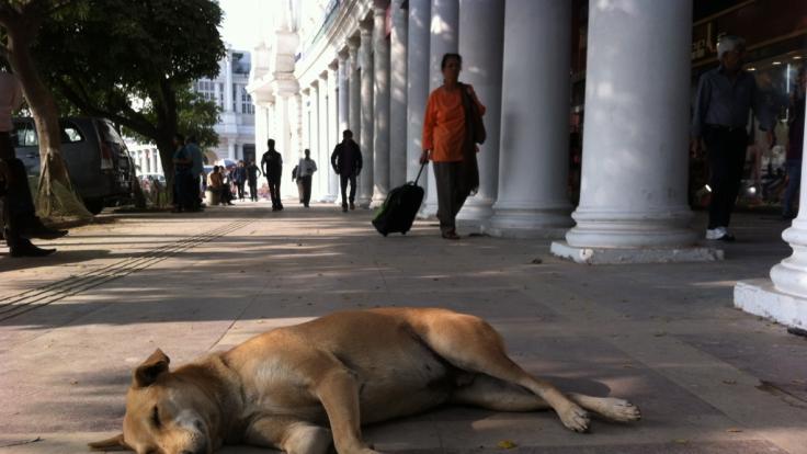 In Indien wurde ein Hund brutal vergewaltigt. (Symbolfoto)