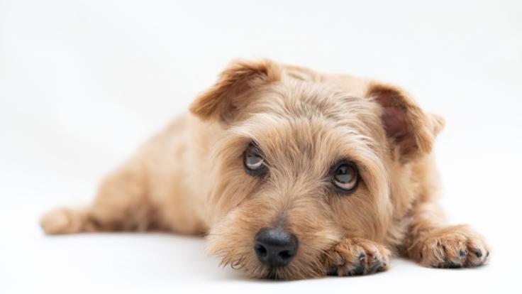 Auf der Insel Rügen ist ein misshandelter Hund vor dem sicheren Tod gerettet worden (Symbolfoto).