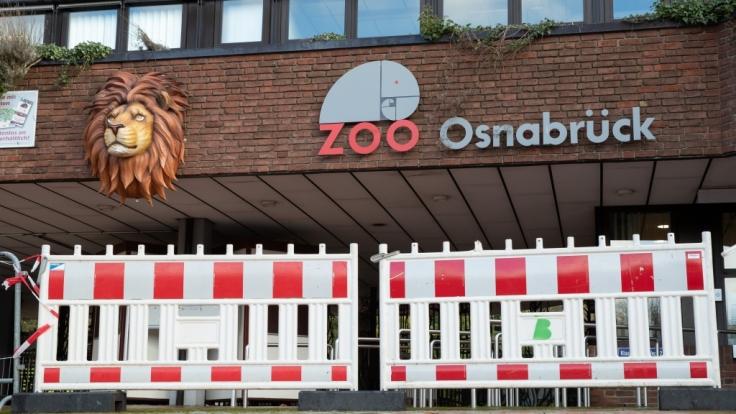 Im Zoo Osnabrück ist eine Tierpflegerin von einem Löwen angegriffen worden. (Foto)