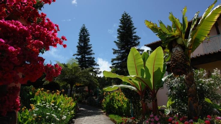 Blütenpracht, wohin das Auge reicht - Madeira heißt nicht umsonst die Insel des ewigen Frühlings. (Foto)