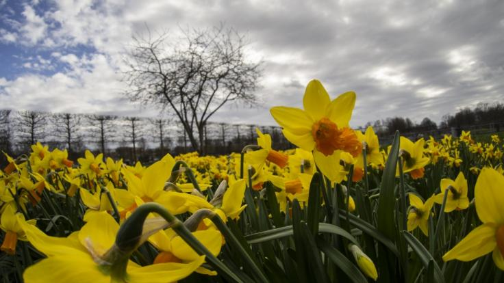 Das Wetter zu Ostern 2020 dürfte weniger sonnig ausfallen als zu Beginn April. (Foto)