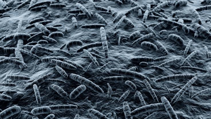 Fleischfressende Bakterien können enorme Schäden im Körper eines Menschen anrichten. Ein US-Amerikaner hätte so fast sein Leben verloren. (Foto)
