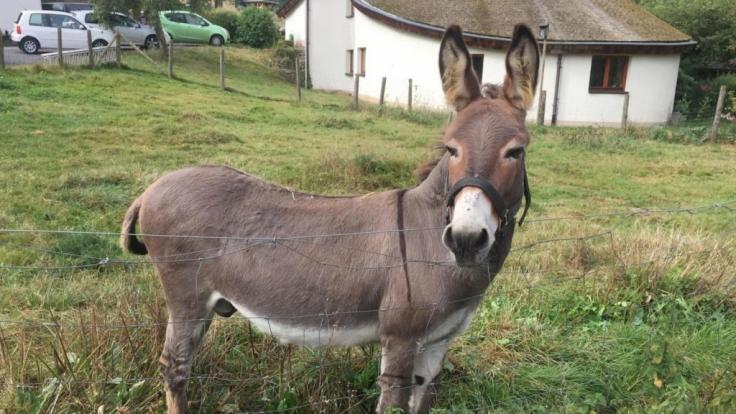 Der Mann verging sich an einem Esel. (Foto)
