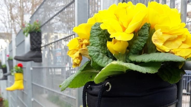 Geschenk für den Gartenzaun (Foto)