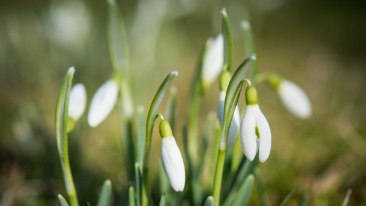 Der Hundertjährige Kalender prophezeit einen kühlen Frühlingsanfang.