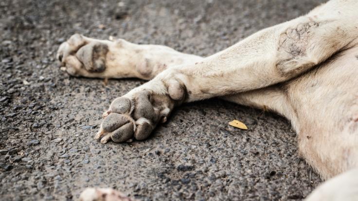 In den USA wurde ein Hund Opfer eines brutalen Tierquälers. (Foto)