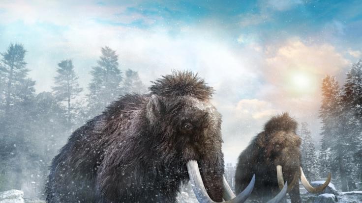 Forscher entwickeln Mammut-Hybride, die das Klima mit schützen sollen. (Symbolfoto) (Foto)