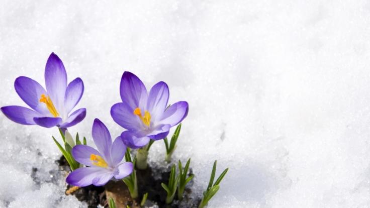 Der Frühling kündigt sich mit milden Temperaturen bis 15 Grad an. (Foto)