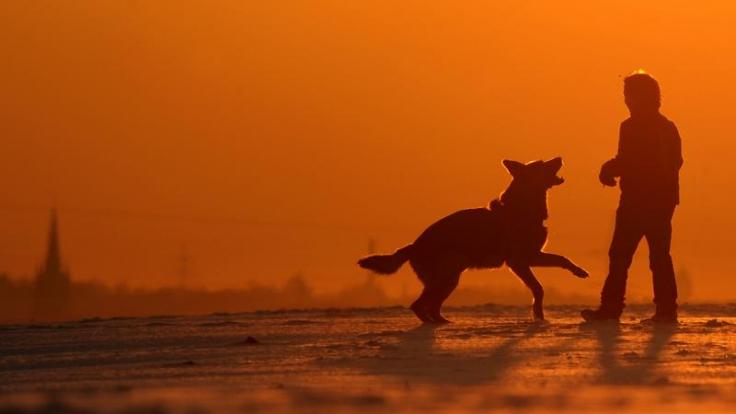 Mensch und Hund, eine mal mehr, mal weniger funktionierende Beziehung. (Foto)