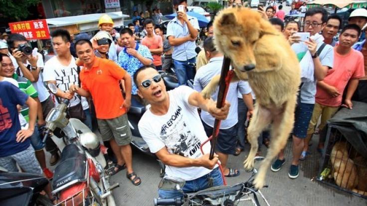 Ein Händler zeigt seine Ware. Dieser Tier wird bald von den Zuschauern verspeist. (Foto)