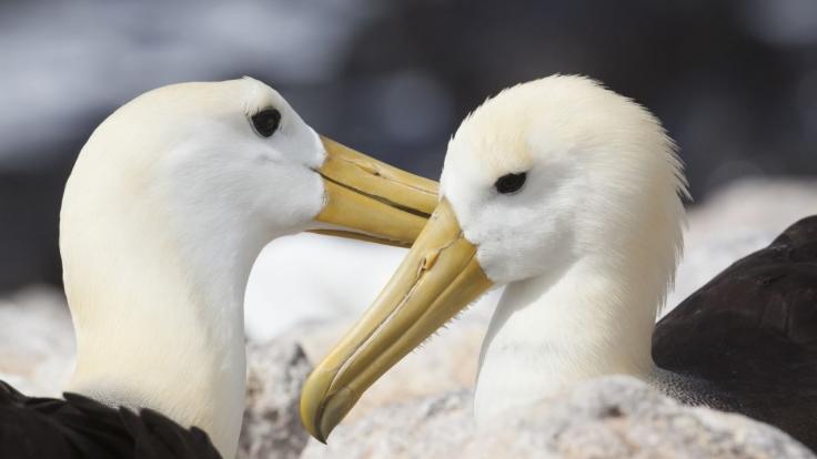 Galapagos bei Das Erste (Foto)