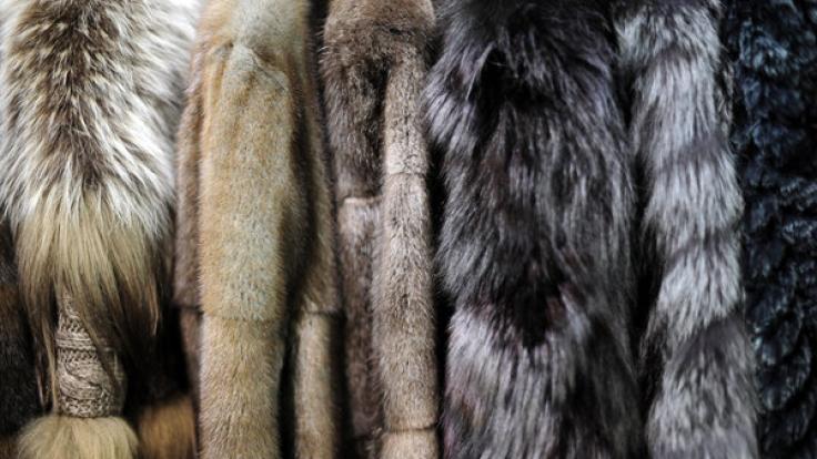 Echtpelz ist immer noch in Mode trotz Warnungen von Tierschützern.