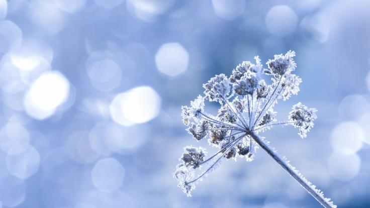 Bis Mitte der Woche beschert Kaltluft aus Nordosten deutschlandweit Dauerfrost.